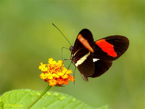 Amazing Butterflies Color Schemes Collection - Stories Today