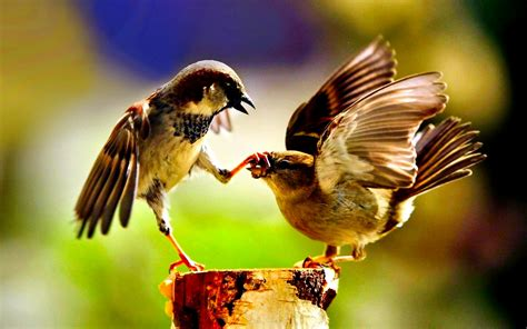 Birds HD Wallpapers and Background Images - Static